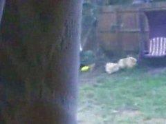 Spying on the backyard
