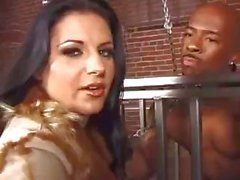 Brunettes in fishnets in different scenes blowing and getting banged