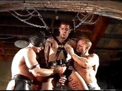CBT Orgy suspended and caged in chain while 3 men hang weights from his already bashed balls