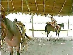 Genieten van een paard terug te rijden terwijl het hebben van gepassioneerde seks !