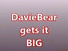 DavieBear tomar GRAN