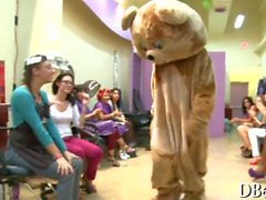 dancing bear comes along and they all perk up