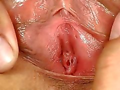 Sıcak genç parmak kedi