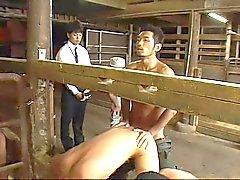 Porn xxx horny